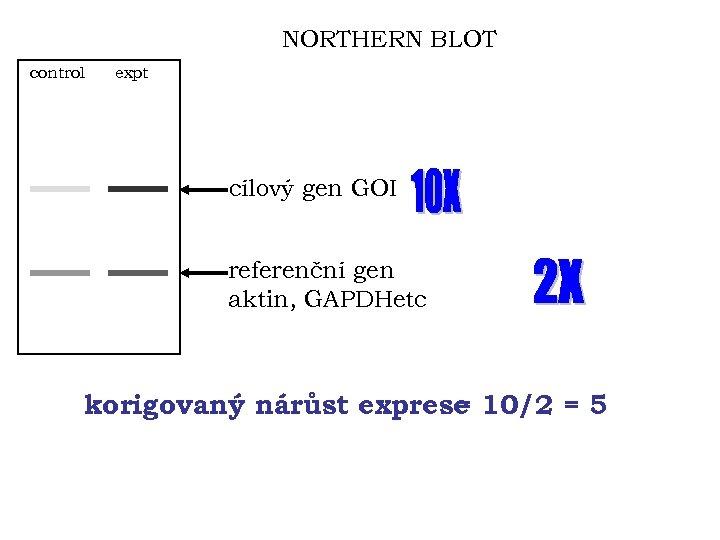 NORTHERN BLOT control expt cílový gen GOI referenční gen aktin, GAPDHetc korigovaný nárůst exprese