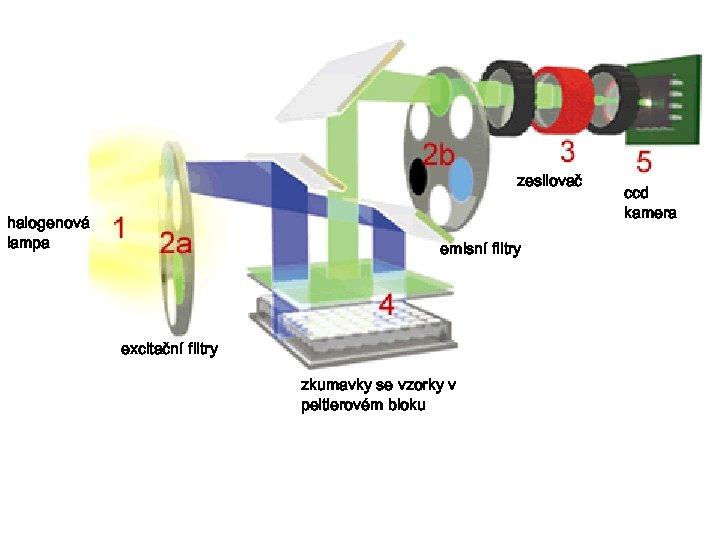 zesilovač halogenová lampa emisní filtry excitační filtry zkumavky se vzorky v peltierovém bloku ccd
