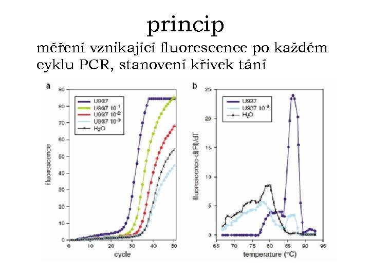 princip měření vznikající fluorescence po každém cyklu PCR, stanovení křivek tání