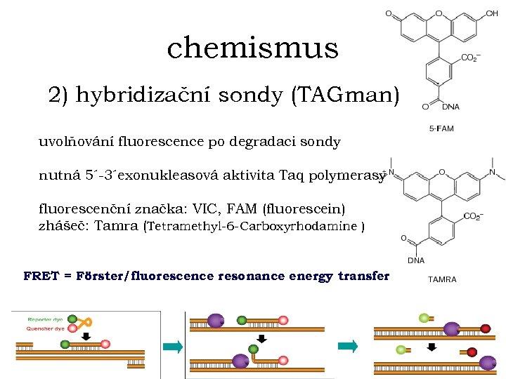 chemismus 2) hybridizační sondy (TAGman) uvolňování fluorescence po degradaci sondy nutná 5´-3´exonukleasová aktivita Taq