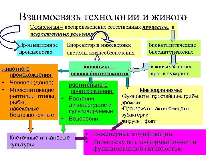 Взаимосвязь технологии и живого Технология – воспроизведение естественных процессов, в искусственных условиях. Промышленное производство
