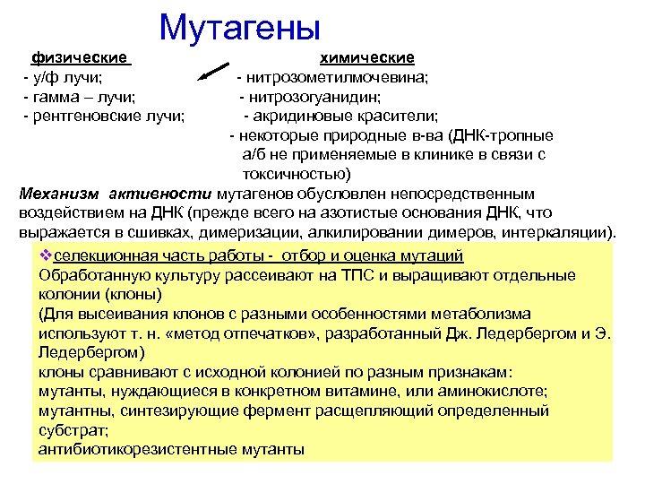 Мутагены физические химические - у/ф лучи; - нитрозометилмочевина; - гамма – лучи; -