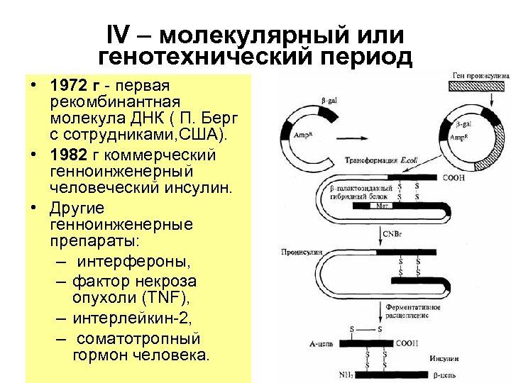 IV – молекулярный или генотехнический период • 1972 г - первая рекомбинантная молекула ДНК