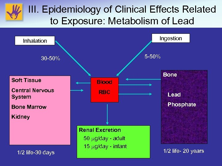 III. Epidemiology of Clinical Effects Related to Exposure: Metabolism of Lead Ingestion Inhalation 5
