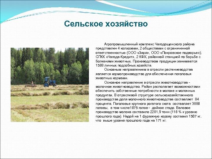 Сельское хозяйство Агропромышленный комплекс Чагодощенского района представлен 4 колхозами, 2 обществами с ограниченной ответственностью
