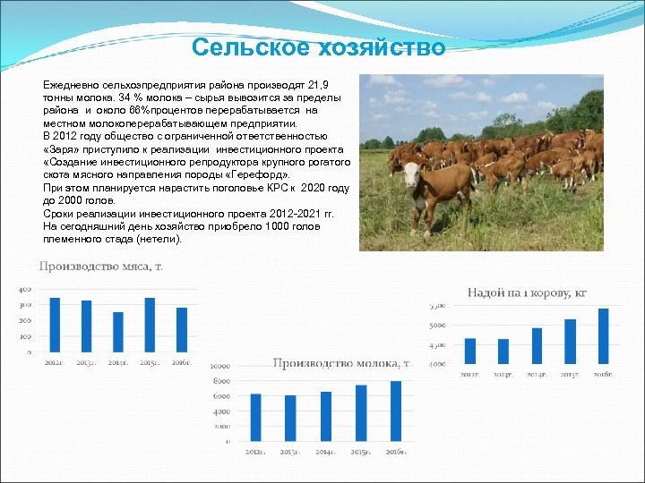 Сельское хозяйство Ежедневно сельхозпредприятия района производят 21, 9 тонны молока. 34 % молока –