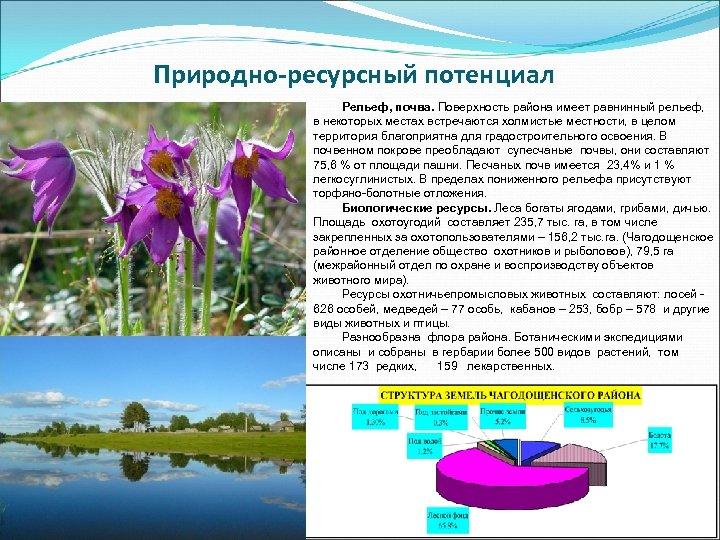 Природно-ресурсный потенциал Рельеф, почва. Поверхность района имеет равнинный рельеф, в некоторых местах встречаются холмистые