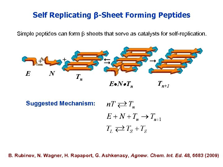 Self Replicating β-Sheet Forming Peptides Simple peptides can form β sheets that serve as