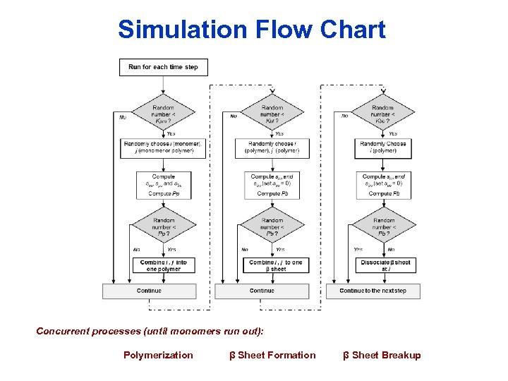 Simulation Flow Chart Concurrent processes (until monomers run out): Polymerization β Sheet Formation β