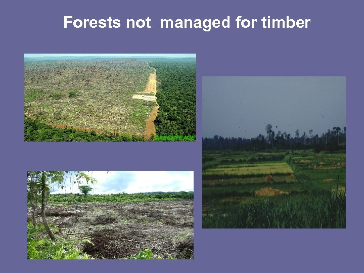Forests not managed for timber