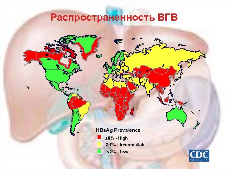 Распространенность ВГВ HBs. Ag Prevalence 8% - High 2 -7% - Intermediate <2% -