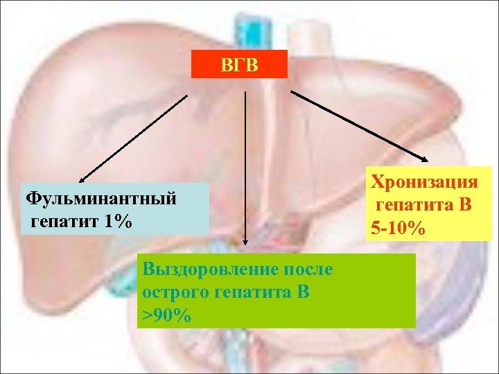 ВГВ Фульминантный гепатит 1% Выздоровление после острого гепатита В >90% Хронизация гепатита В 5