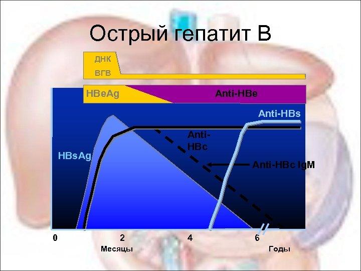 Острый гепатит В ДНК ВГВ HBe. Ag Anti-HBe Anti-HBs HBs. Ag Anti. HBc Anti-HBc