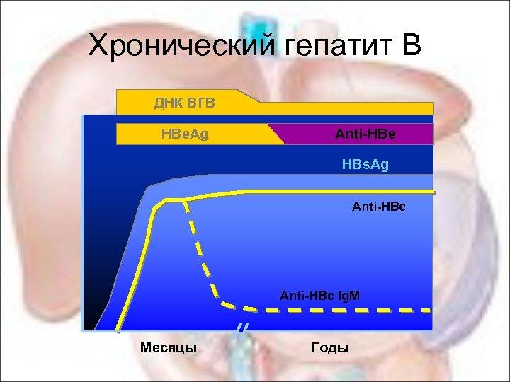 Хронический гепатит В ДНК ВГВ HBe. Ag Anti-HBe HBs. Ag Anti-HBc Ig. M Месяцы