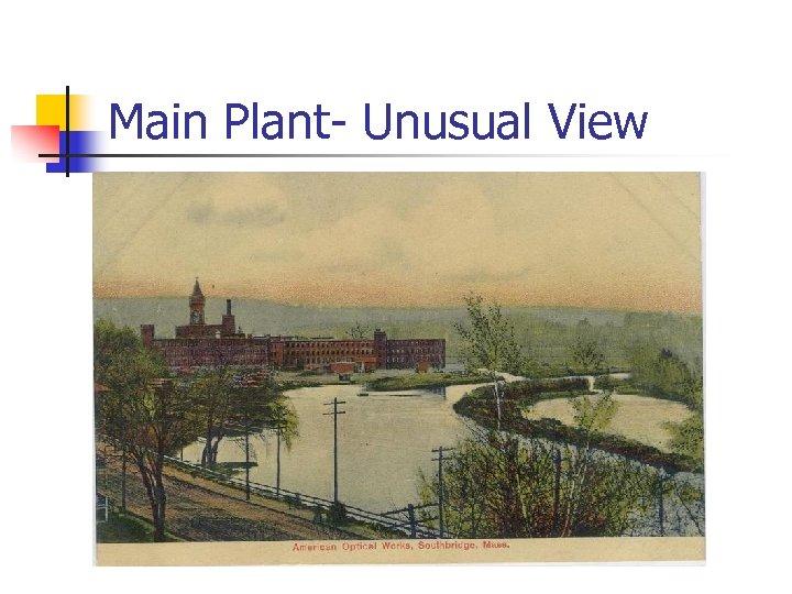 Main Plant- Unusual View