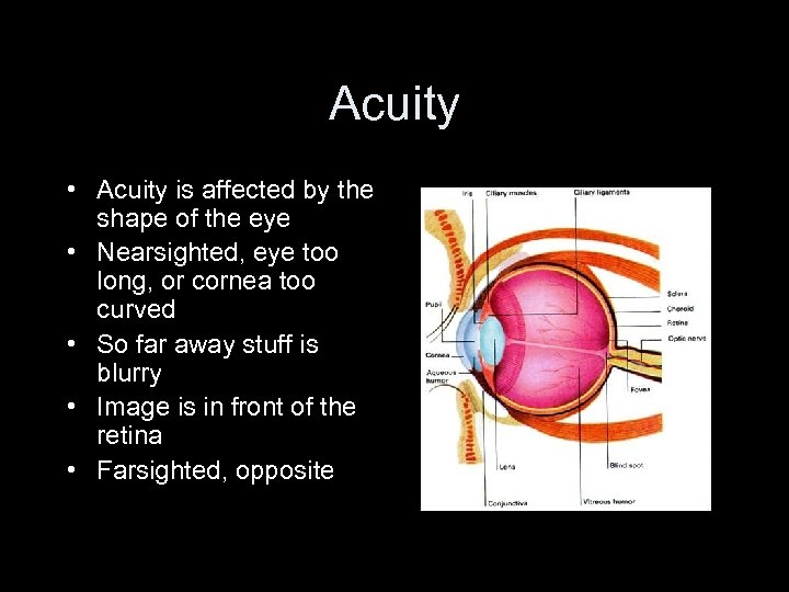 Acuity • Acuity is affected by the shape of the eye • Nearsighted, eye