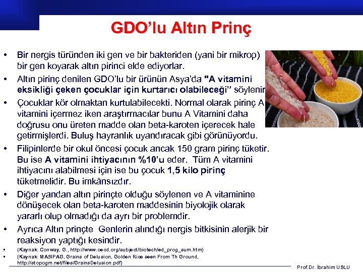 GDO'lu Altın Prinç • • Bir nergis türünden iki gen ve bir bakteriden (yani
