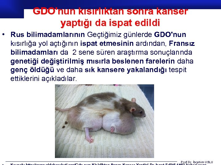 GDO'nun kısırlıktan sonra kanser yaptığı da ispat edildi • Rus bilimadamlarının Geçtiğimiz günlerde GDO'nun