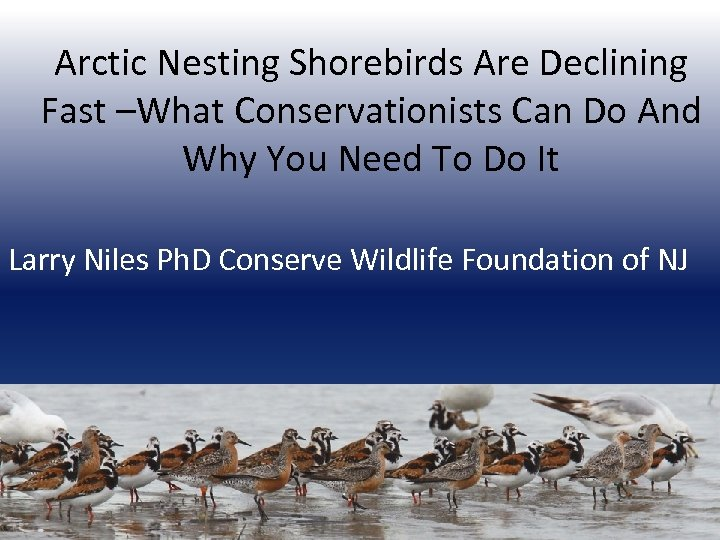 Arctic Nesting Shorebirds Are Declining Fast –What Conservationists Can Do And Why You Need