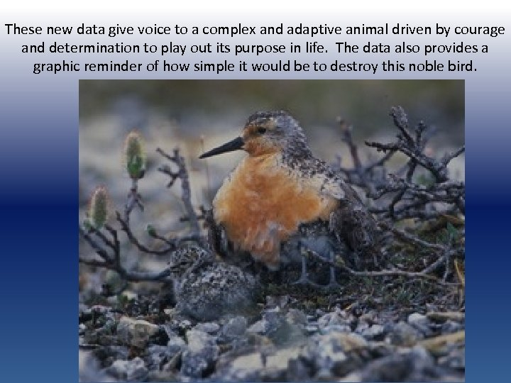 These new data give voice to a complex and adaptive animal driven by courage