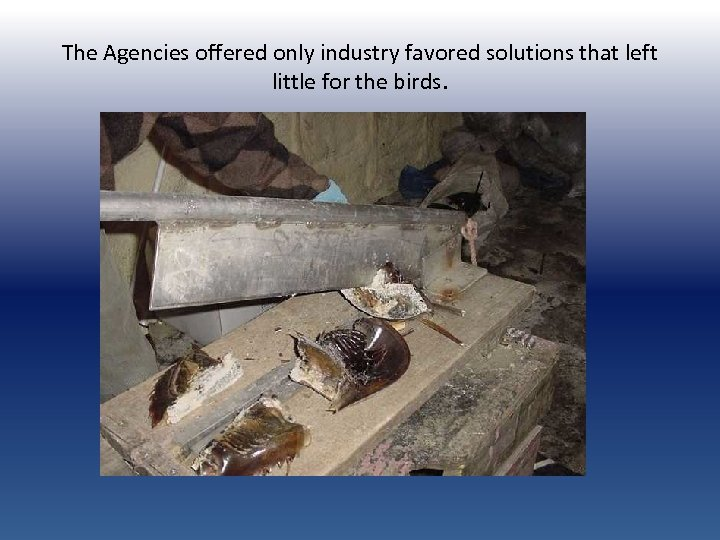The Agencies offered only industry favored solutions that left little for the birds.