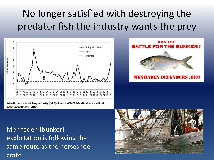 No longer satisfied with destroying the predator fish the industry wants the prey Menhaden
