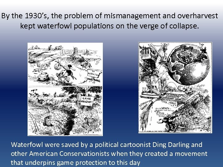 By the 1930's, the problem of mismanagement and overharvest kept waterfowl populations on the