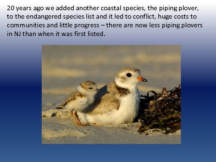 20 years ago we added another coastal species, the piping plover, to the endangered