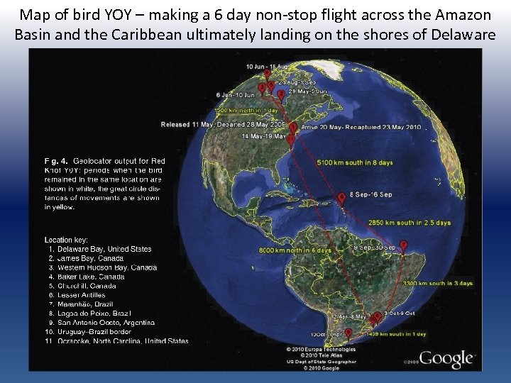 Map of bird YOY – making a 6 day non-stop flight across the Amazon