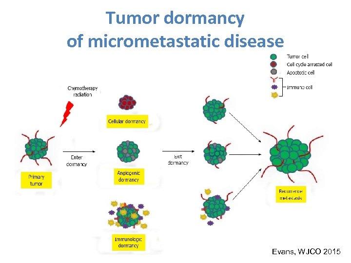 Tumor dormancy of micrometastatic disease Evans, WJCO 2015