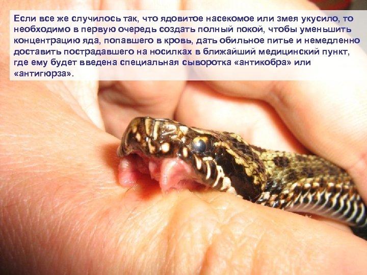 Если все же случилось так, что ядовитое насекомое или змея укусило, то необходимо в