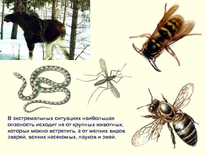 В экстремальных ситуациях наибольшая опасность исходит не от крупных животных, которых можно встретить, а