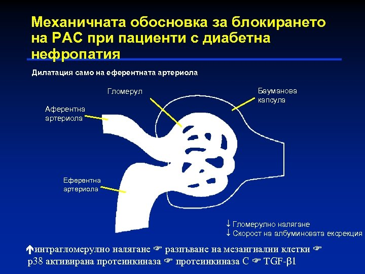 Механичната обосновка за блокирането на РАС при пациенти с диабетна нефропатия Дилатация само на