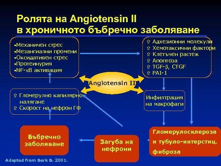 Ролята на Angiotensin II в хроничното бъбречно заболяване • Механичен стрес • Мезангиални промени