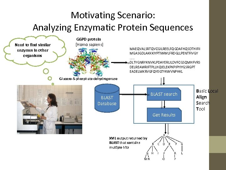 Motivating Scenario: Analyzing Enzymatic Protein Sequences Need to find similar enzymes in other organisms