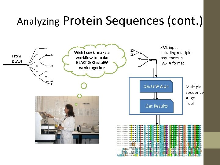 Analyzing Protein Sequences (cont. ) From BLAST Wish I could make a workflow to