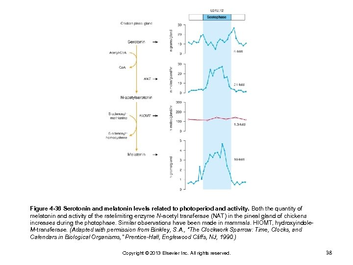 Figure 4 -36 Serotonin and melatonin levels related to photoperiod and activity. Both the