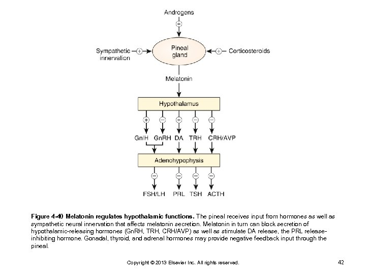 Figure 4 -40 Melatonin regulates hypothalamic functions. The pineal receives input from hormones as