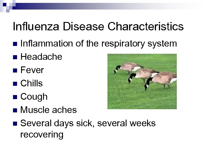 Influenza Disease Characteristics Inflammation of the respiratory system n Headache n Fever n Chills