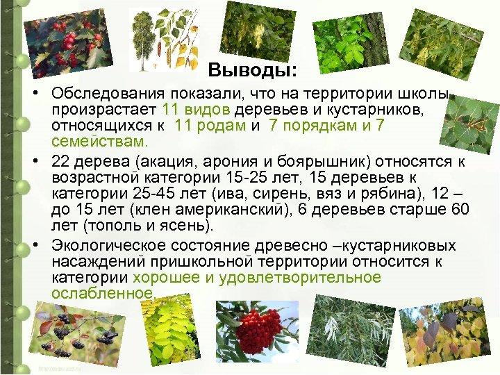 Выводы: • Обследования показали, что на территории школы произрастает 11 видов деревьев и кустарников,
