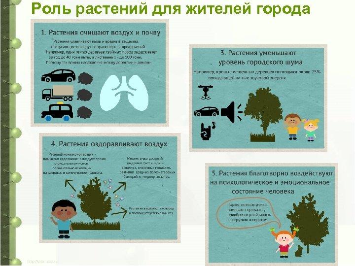 Роль растений для жителей города