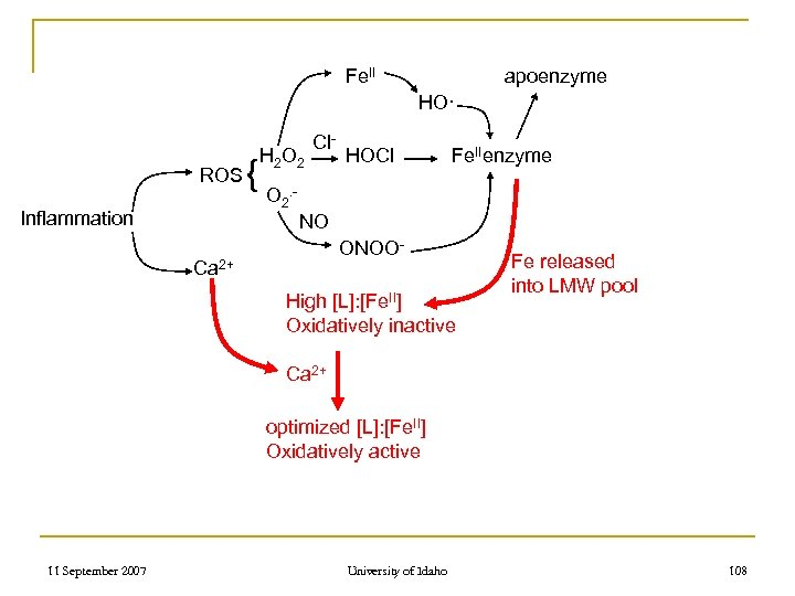 Fe. II apoenzyme HO· ROS Inflammation { H 2 O 2 Cl- HOCl Fe.