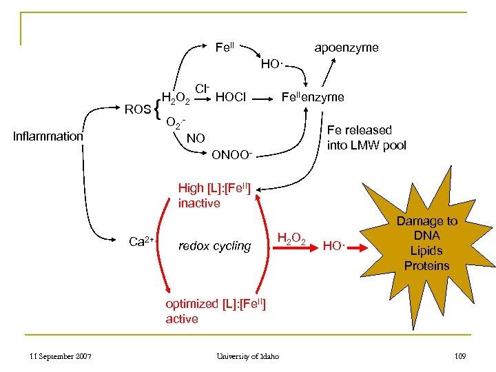 Fe. II apoenzyme HO· ROS { Inflammation H 2 O 2 Cl- HOCl Fe.