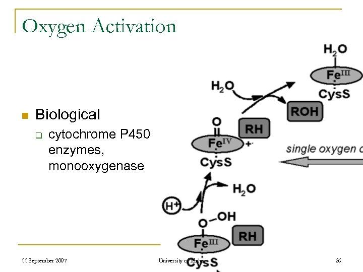 Oxygen Activation n Biological q cytochrome P 450 enzymes, monooxygenase 11 September 2007 University