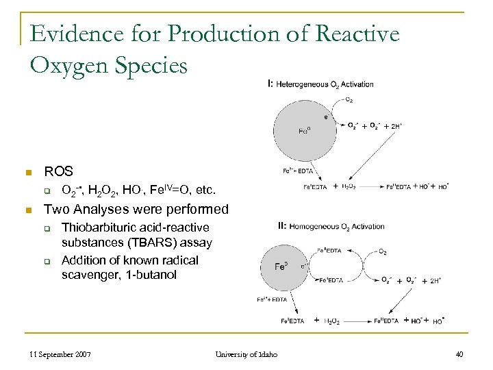 Evidence for Production of Reactive Oxygen Species n ROS q n O 2 -