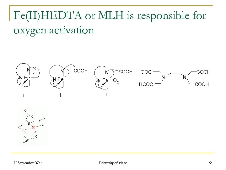 Fe(II)HEDTA or MLH is responsible for oxygen activation N N N Fe I 11