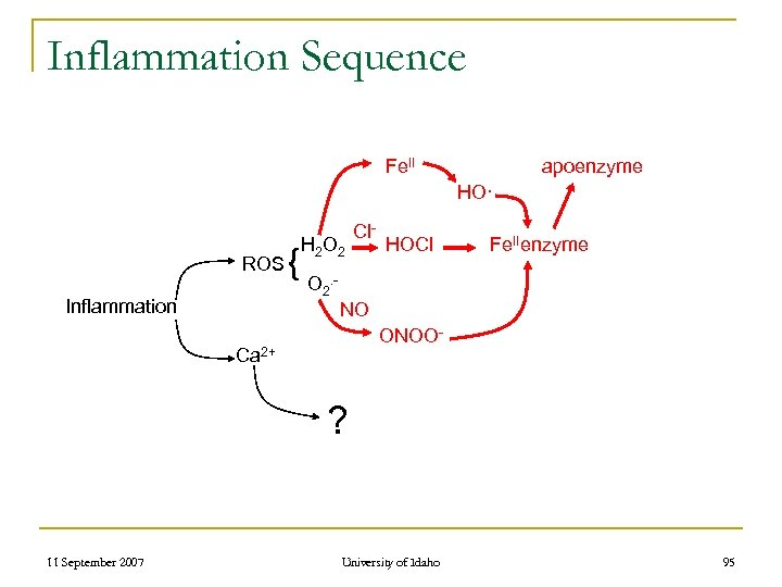 Inflammation Sequence Fe. II apoenzyme HO· ROS Inflammation { H 2 O 2 Cl-