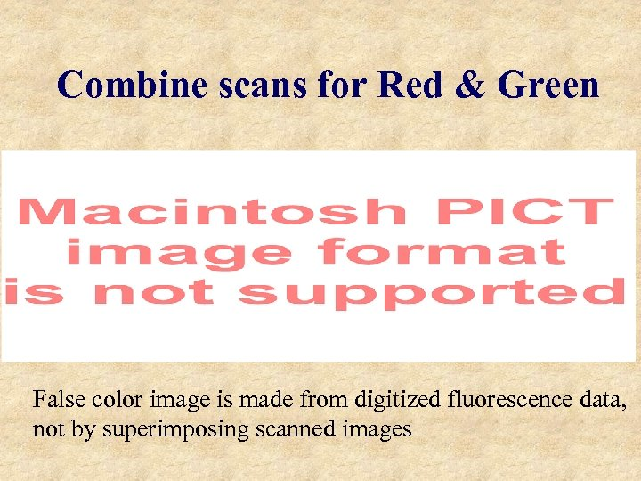 Combine scans for Red & Green False color image is made from digitized fluorescence