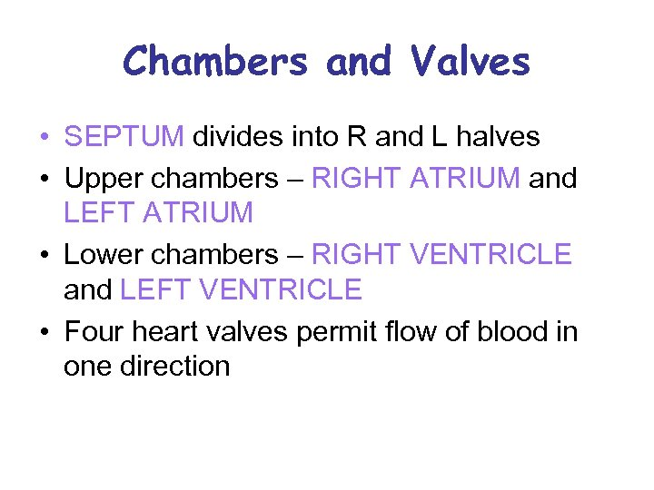 Chambers and Valves • SEPTUM divides into R and L halves • Upper chambers