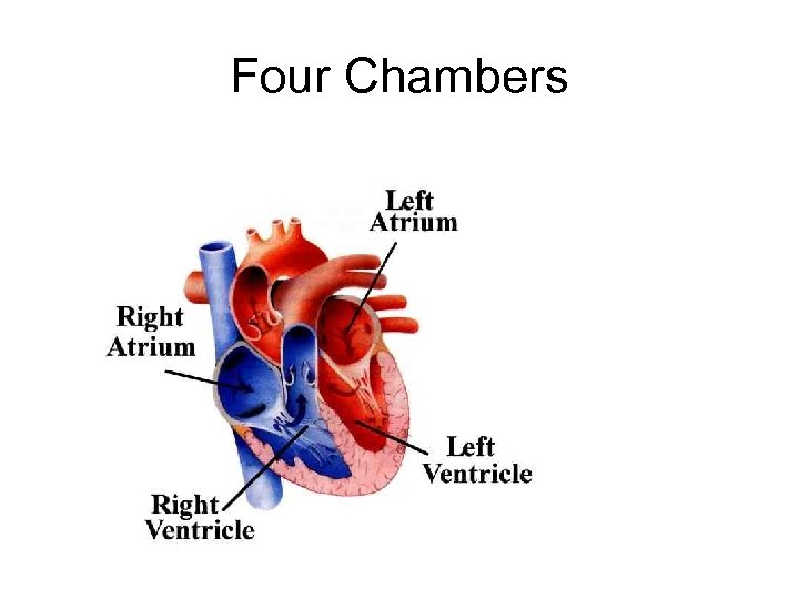 Four Chambers